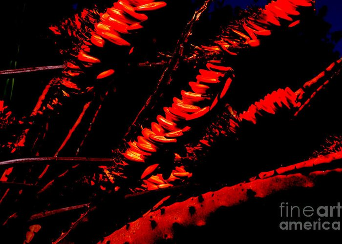 Red Greeting Card featuring the digital art Burning Flowers by John Le Brasseur