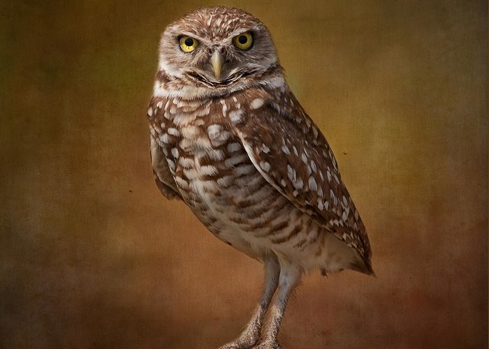 Wildlife Greeting Card featuring the photograph Burrowing Owl Portrait by Kim Hojnacki