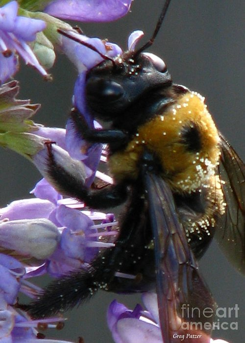 Patzer Greeting Card featuring the photograph Busy Bee by Greg Patzer