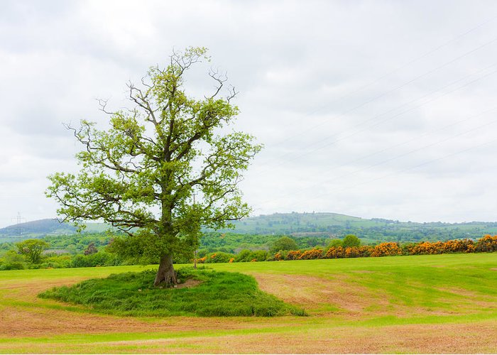 Clouds Greeting Card featuring the photograph But Only God Can Make A Tree by Semmick Photo