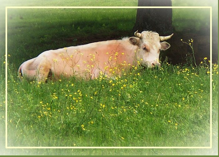 Animal Greeting Card featuring the photograph Buttercup by Joy Nichols