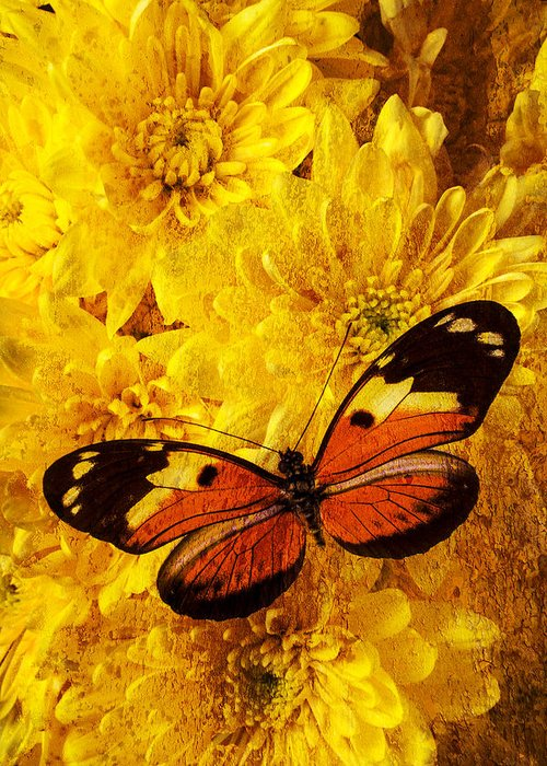 Abstract Greeting Card featuring the photograph Butterfly Abstract by Garry Gay