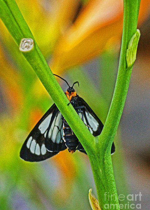 Butterflies Greeting Card featuring the photograph Butterfly An3597-13 by Randy Harris