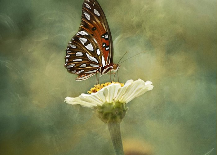 Butterfly Greeting Card featuring the photograph Butterfly Dreams by Kim Hojnacki