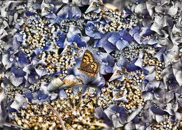 Insects Greeting Card featuring the photograph Butterfly In Blue by Darryl Gibbs