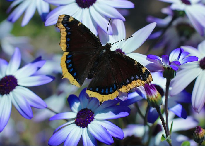 Mourning Cloak Greeting Card featuring the photograph Butterfly In Blue by Heidi Smith