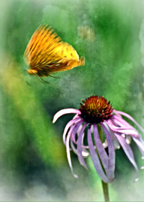 Butterfly Greeting Card featuring the photograph Butterfly In Flight by Marty Koch