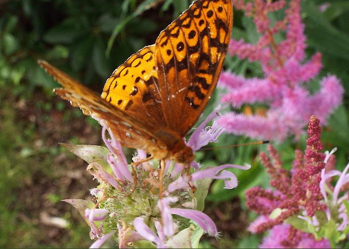 Animals Greeting Card featuring the photograph Butterfly In The Garden by Cheryl King