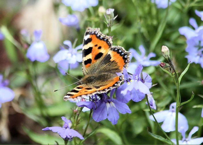 Butterfly Greeting Card featuring the photograph Butterfly On Blue Flower by Gordon Auld
