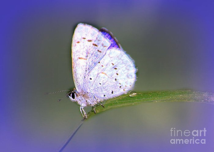 Insects Greeting Card featuring the photograph Butterfly On Grass by Irina Hays