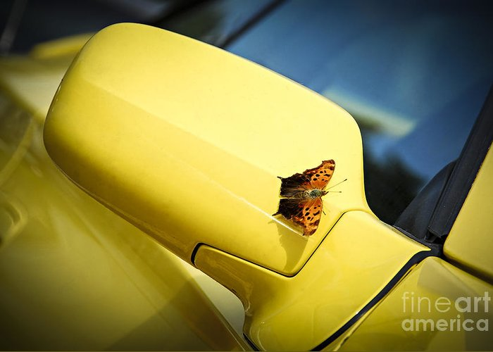 Car Greeting Card featuring the photograph Butterfly On Sports Car Mirror by Elena Elisseeva