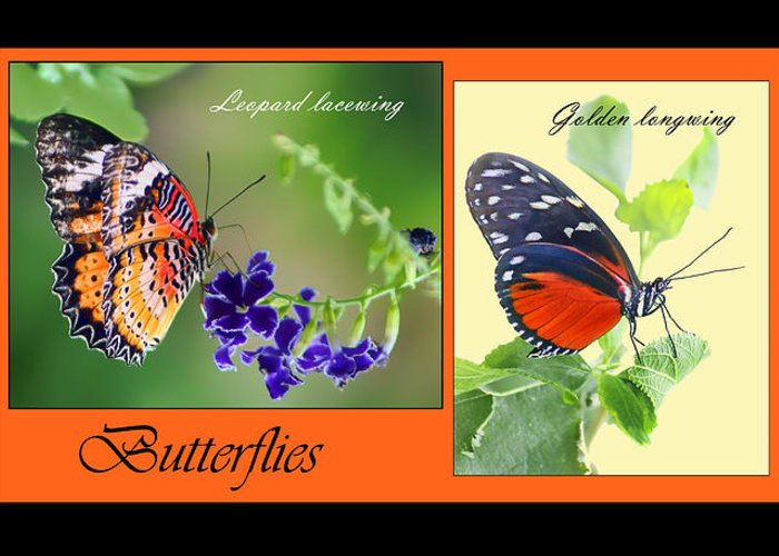 Butterfly Greeting Card featuring the photograph Butterfly Triptych by Nikolyn McDonald