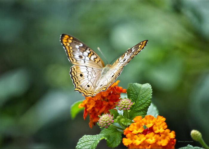 Il Greeting Card featuring the photograph Butterfly Wings Of Sun 2 by Thomas Woolworth