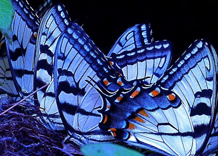 Butterflies Greeting Card featuring the photograph Butterfly Wings by Rita Mueller