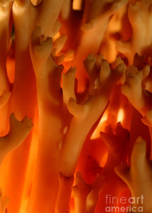 Mushroom Greeting Card featuring the photograph C Ribet Mushroom And Fungi Art Coral by C Ribet