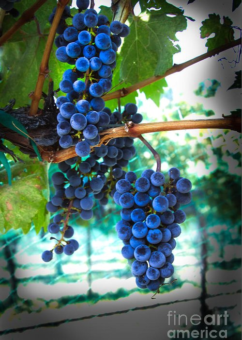 Red Wine Greeting Card featuring the photograph Cabernet Sauvignon Grapes by Robert Bales