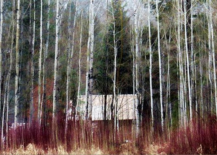 Cabin Greeting Card featuring the photograph Cabin In The Forest by Rick Lawler