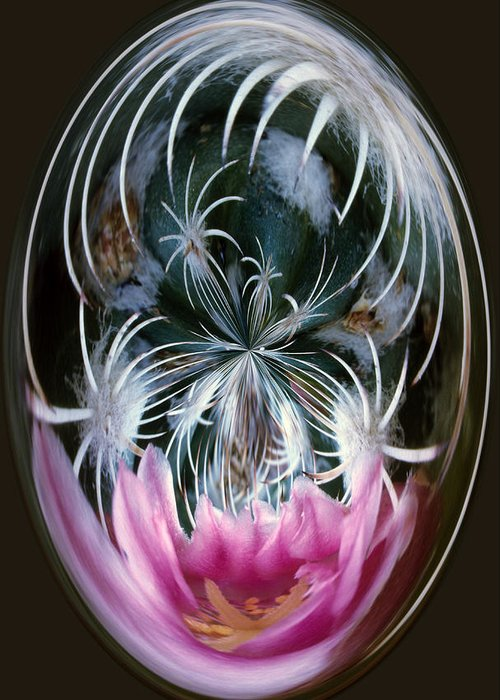 Abstract Greeting Card featuring the photograph Cactus Flower Abstract by Keith Gondron