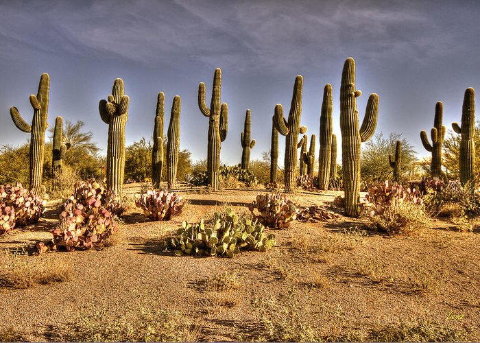 Hdr Greeting Card featuring the photograph Cactus Patch by George Lenz