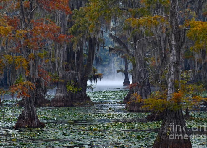 Morning Greeting Card featuring the photograph Caddo Lake Morning by Snow White