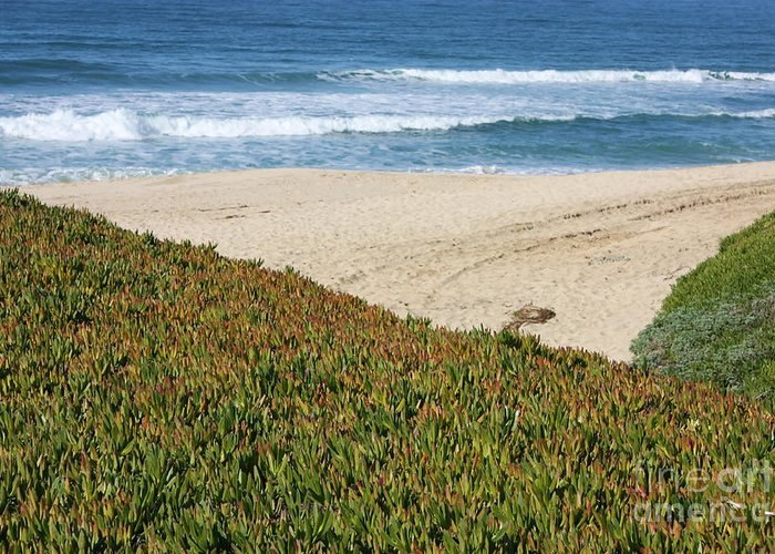 Half Moon Bay Greeting Card featuring the photograph California Beach With Ice Plant by Carol Groenen