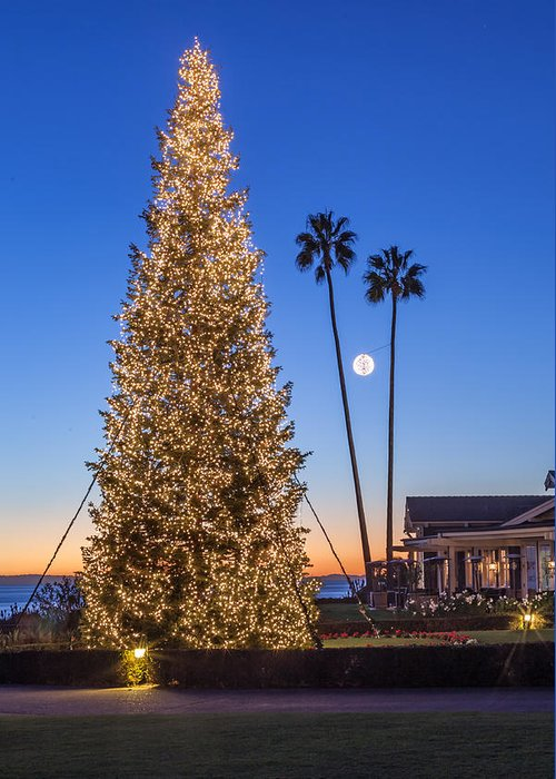 Christmas Tree Greeting Card featuring the photograph California Christmas by Cliff Wassmann