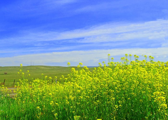 California Greeting Card featuring the photograph California In Spring by Rima Biswas