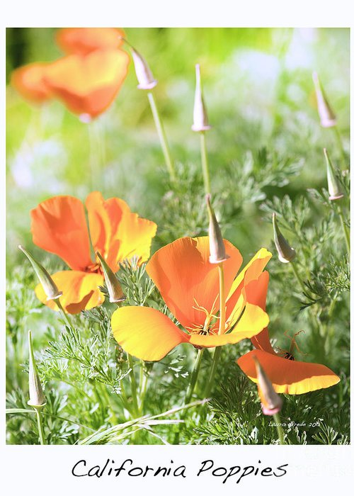 California Poppies Greeting Card featuring the photograph California Poppies by Artist and Photographer Laura Wrede