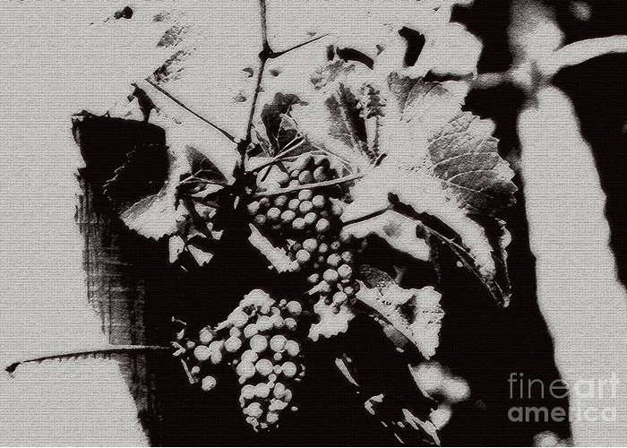 Grape Greeting Card featuring the photograph California Vineyard by Linda Shafer