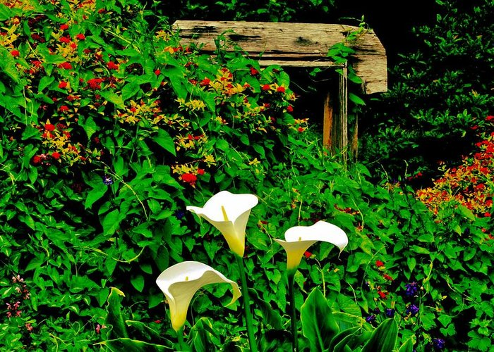 Flowers Greeting Card featuring the photograph Calla Lilies by Benjamin Yeager
