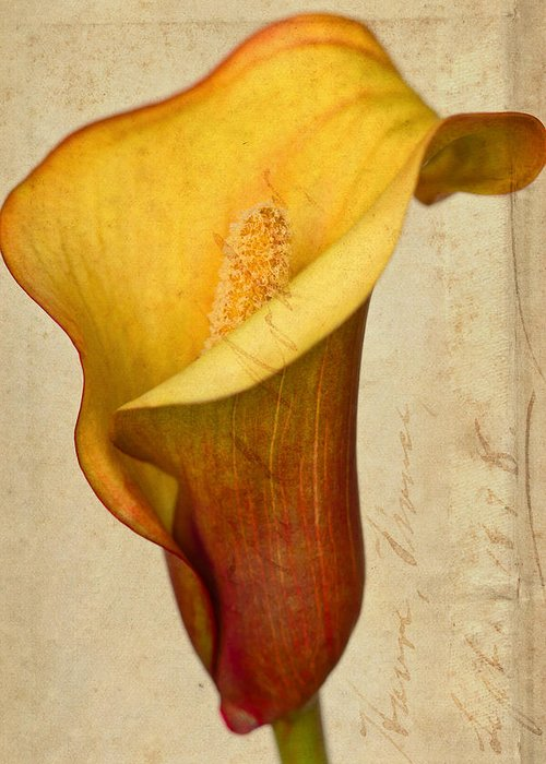 Green Greeting Card featuring the photograph Calla Lily Vintage by Heidi Smith