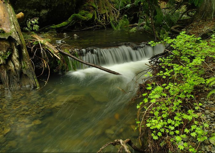 Water Greeting Card featuring the photograph Calm Rapids by Jeff Swan