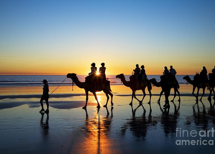 Australia Greeting Card featuring the photograph Camels On The Beach Broome Western Australia by Colin and Linda McKie