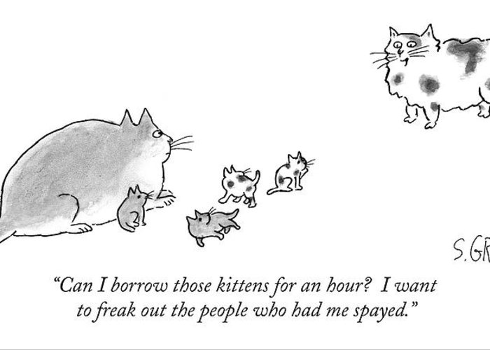 Spay Greeting Cards