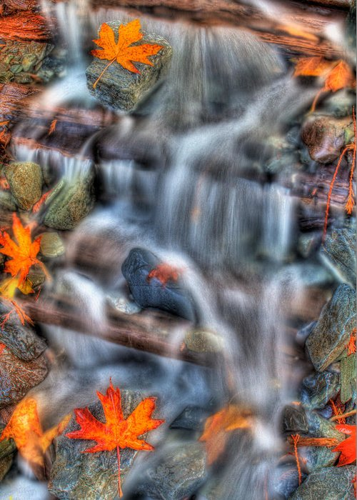 Streams Greeting Card featuring the photograph Canadian Maple Leafs by Naman Imagery
