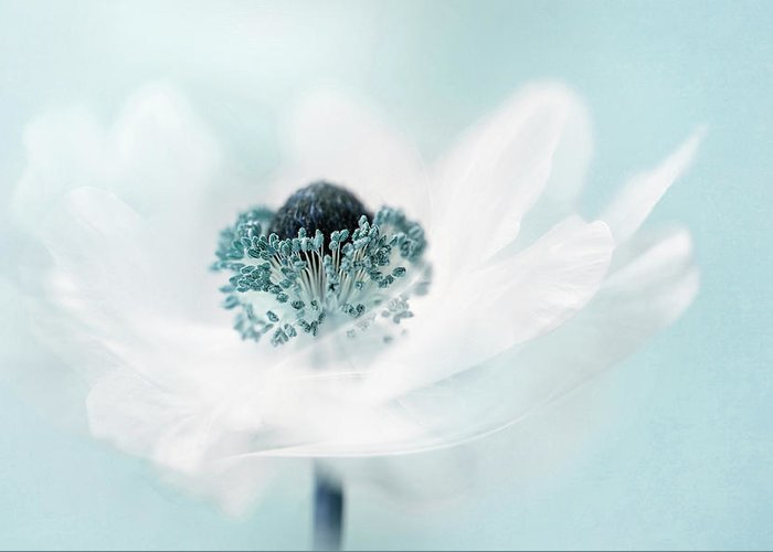 Teal Greeting Card featuring the photograph Candy Floss by Jacky Parker