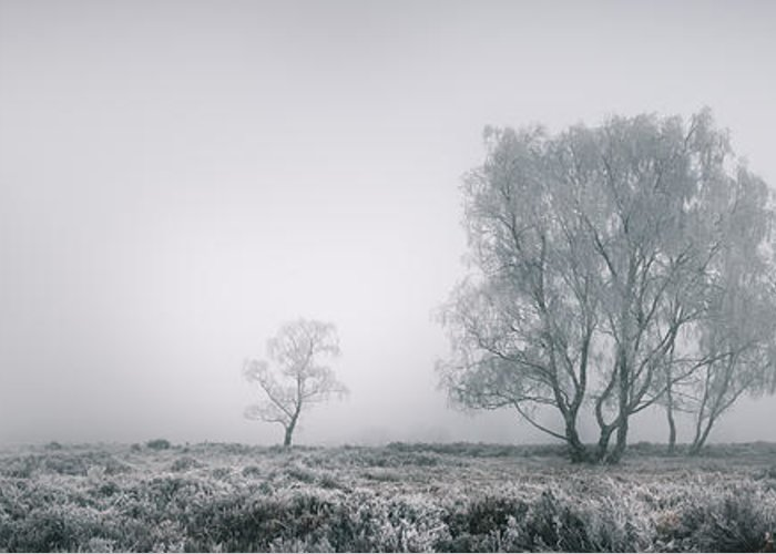 Frost Greeting Card featuring the photograph Cannock Chase by Andy Astbury