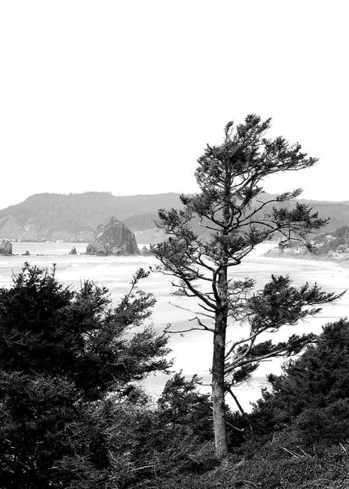 Black And White Greeting Card featuring the photograph Cannon Beach by David Patterson