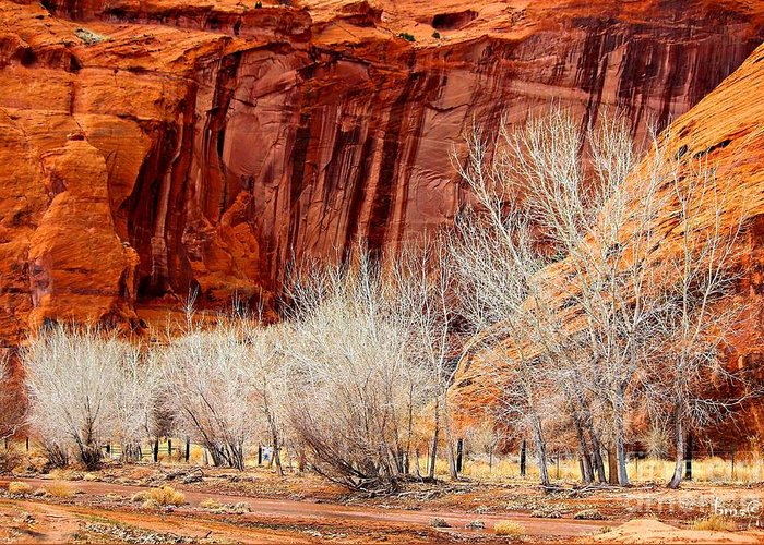Canyons Greeting Card featuring the photograph Canyon De Chelly - Spring II by Barbara Zahno