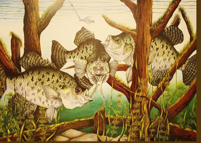 Fishing Greeting Card featuring the drawing Captivating Crappies by Bruce Bley