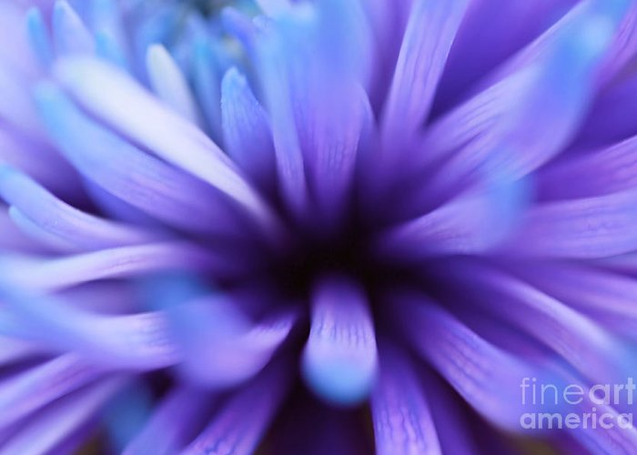 Captivation Greeting Card featuring the photograph Captivation by Inspired Nature Photography Fine Art Photography