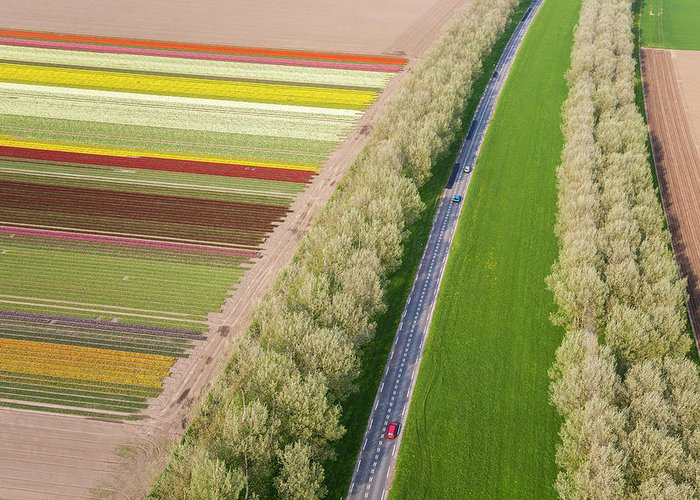 Scenics Greeting Card featuring the photograph Car On Road Near Tulip Fields, Holland by Peter Adams
