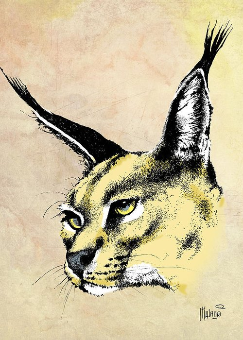 Pen And Ink Lynx Drawings Greeting Cards