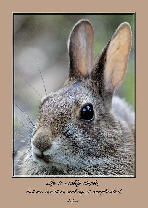 Rabbit Greeting Card featuring the photograph Card 0207 by Helen Ellis
