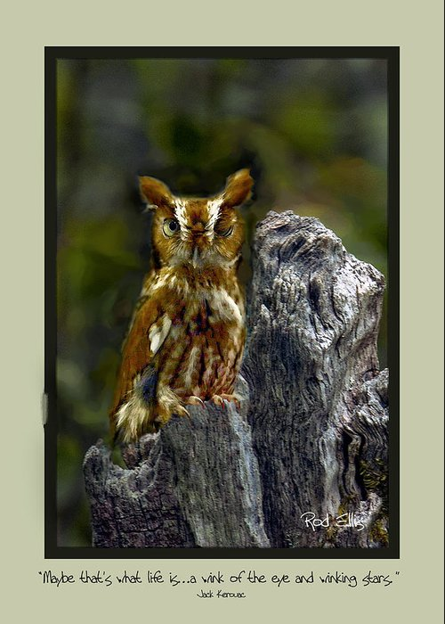 Owl Greeting Card featuring the photograph Card 0209 by Rod Ellis
