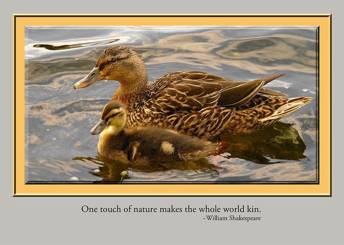 Ducks Greeting Card featuring the photograph Card 1204 by Helen Ellis