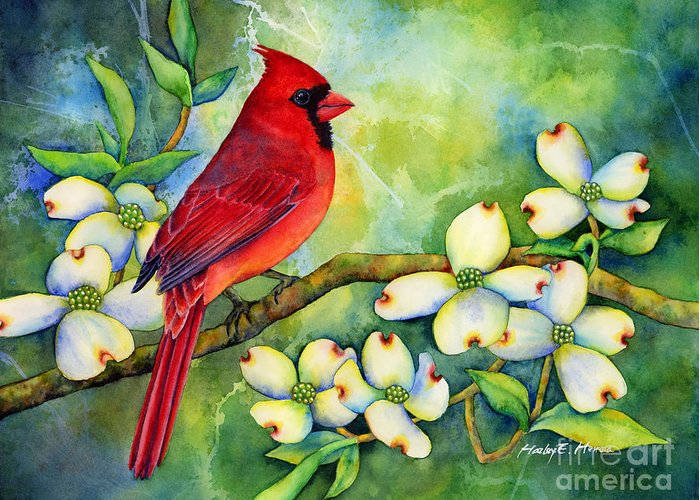 Cardinal Greeting Card featuring the painting Cardinal On Dogwood by Hailey E Herrera