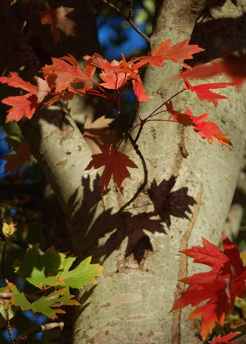 Autumn Greeting Card featuring the photograph Carolina Autumn by Suzanne Gaff