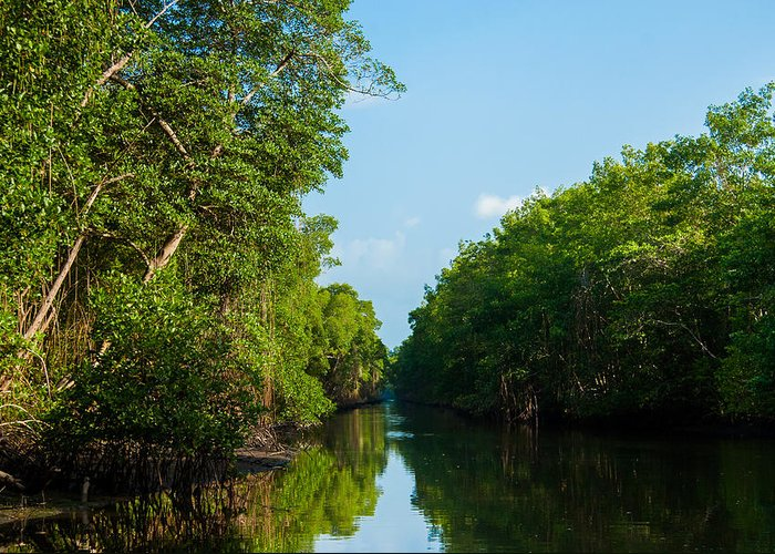 Caroni Greeting Card featuring the photograph Caroni Swamp by Gareth Leigh