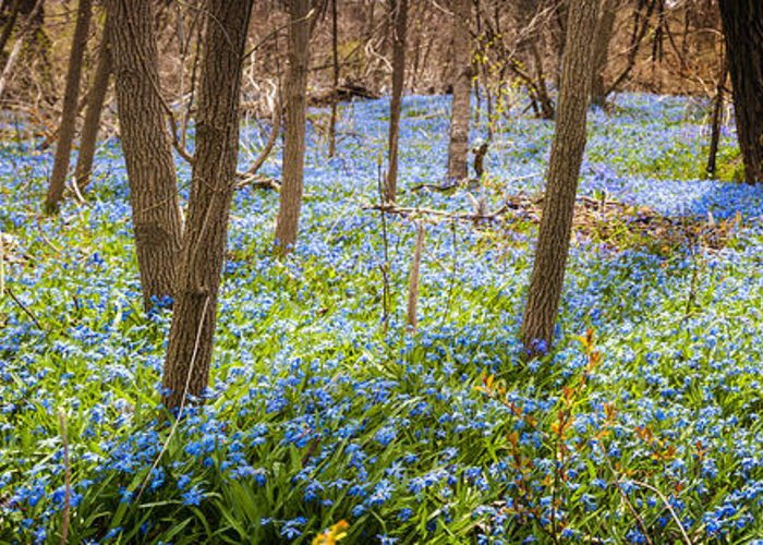 Flowers Greeting Card featuring the photograph Carpet Of Blue Flowers In Spring Forest by Elena Elisseeva